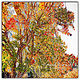 062-Fall Leaves  20x20x300 by Michel Bourquard