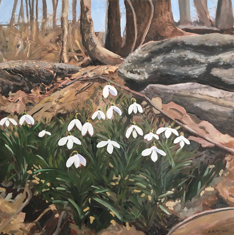 Oil painting Snowdrops Wissahickon  by Ginger Arthur
