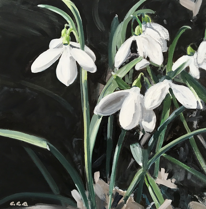 Snow Drops 2016  by Ginger Arthur