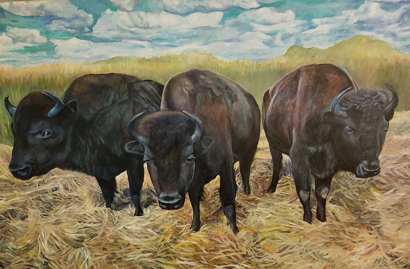 Val's Buffaloes by Nancy Sharp