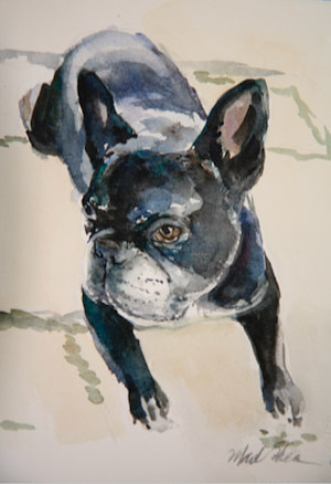 Watercolor fred by Madeline Shea