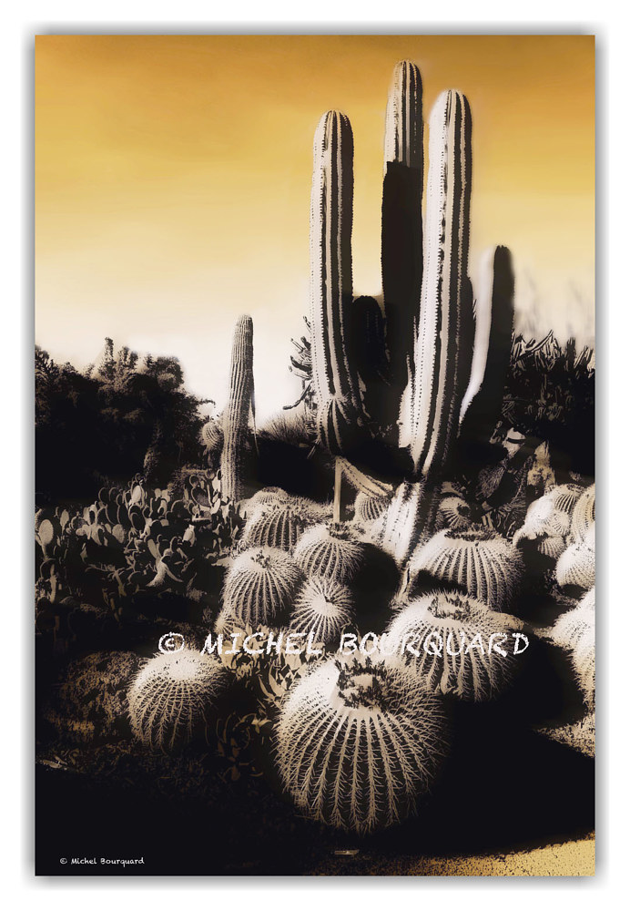 Goggy cacti by Michel Bourquard