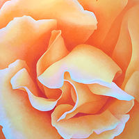 Acrylic painting Rose 2021 by Anne Popperwell