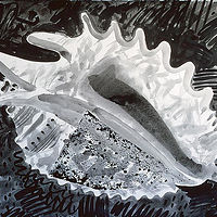 Drawing Conch by Patricia Autenrieth