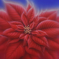 Acrylic painting Poinsettia by Sue Ellen Brown