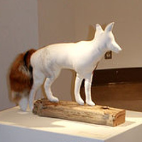 "Installation view of ""The Coyote"", ""The Targeted Fox"" and ""The Beaver"" by Belinda Harrow"