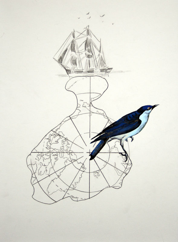 """Sialia Arctica"". Graphite and acrylic on paper. 29 x 38 cm. 2011   by Belinda Harrow"