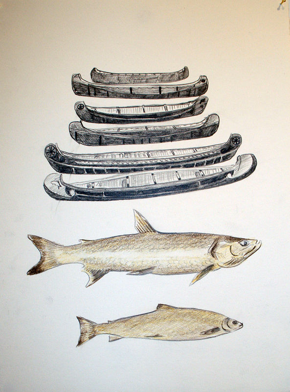 """Hudson Bay Company Canoes and Franklin Fish"".  Graphite and coloured pencil on paper. 29 x 38 cm. 2011  by Belinda Harrow"
