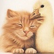 Chaton et canard / Cat and baby duck, 2013 by Genevieve Desy