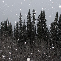 snowing by Belinda Harrow