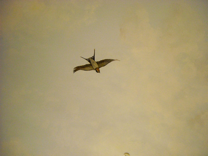 SKY MURAL - BIRD 4 by Cindy Scaife