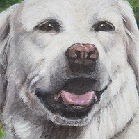 Acrylic painting Dog Painting - Left Side Detail by Cindy Scaife