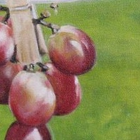 Oil painting Grapes on the line. by Judith  Elsasser