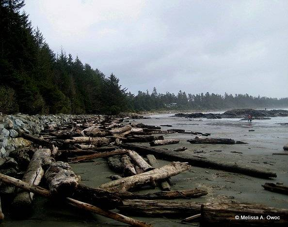 [Wood] Log strewn Chesterman Beach by Melissa Owoc