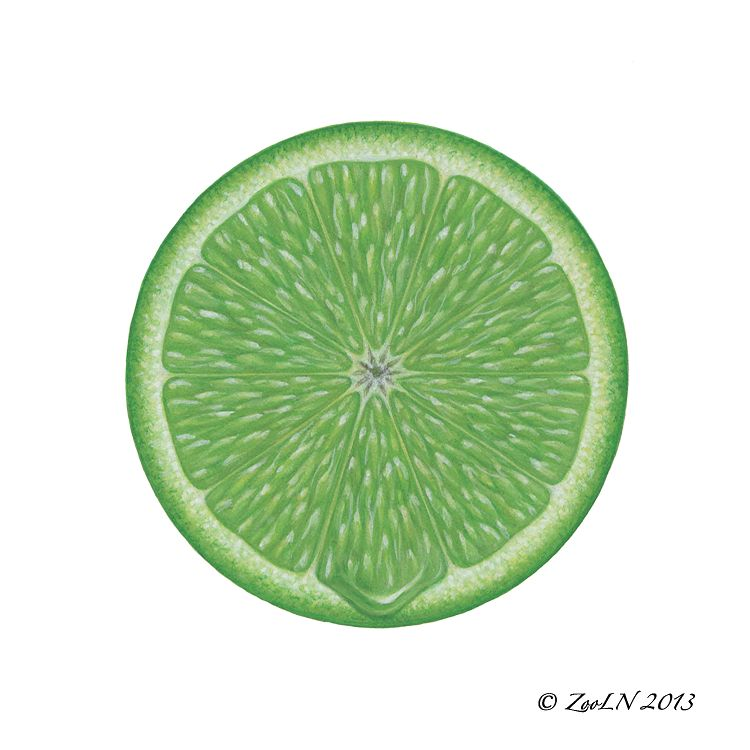 Print Lime Slice by Sue Ellen Brown