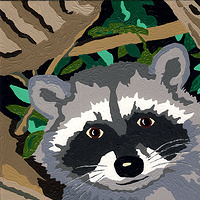 Acrylic painting Raccoon by Phil Cummings