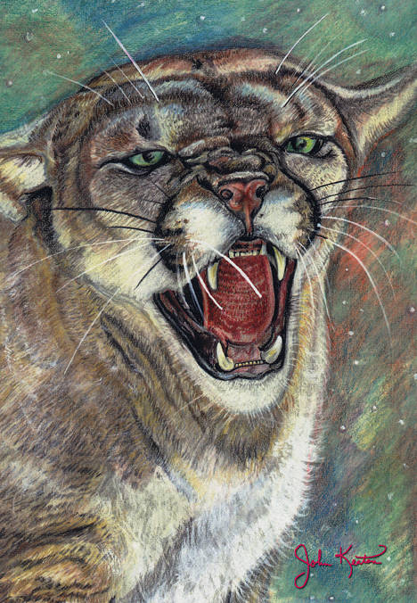 Cougar by John Keaton