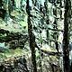 Oil painting A Walk in the Hemlock Forest 9x9in oil by Michael  Gaudreau