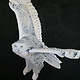Acrylic painting Snowy Owl by Belinda Harrow