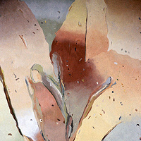 Oil painting another lily by Gary Eleinko