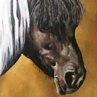 Oil painting Daisy the Afro-fringed Pony by Richard Mountford