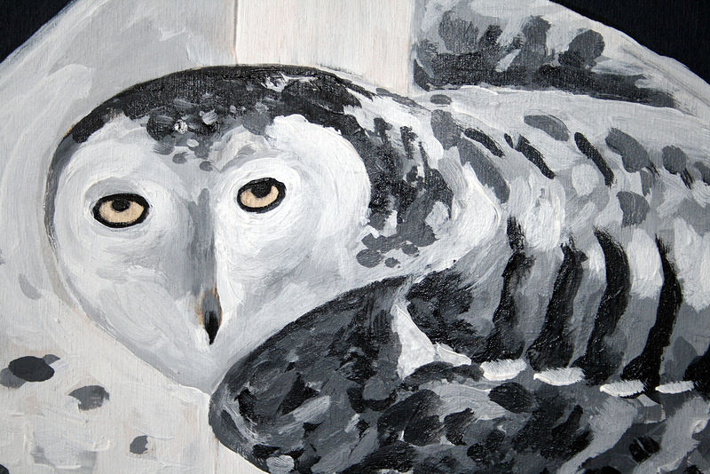 Telephone Line Snowy Owl Detail  by Belinda Harrow