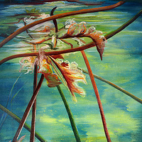 Mixed-media artwork Water lilies 2, 2013 by Sandra  Martin