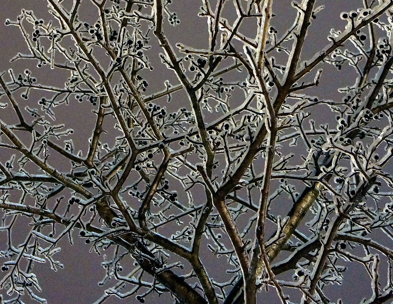 ice storm_01  by John  Douglas