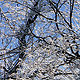 ice storm_11 by John  Douglas