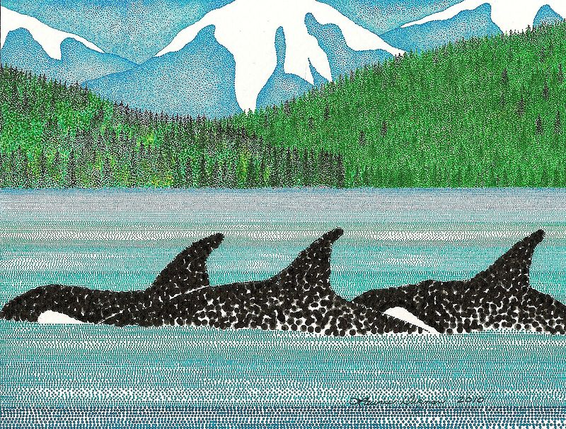 Drawing  ORCA's by Lawrie  Dignan