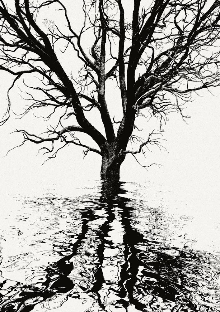 _CITY-A-tree2BW by John  Douglas