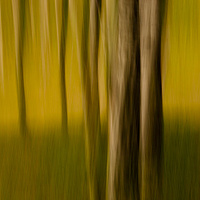 Trees 4 by Jim Friesen