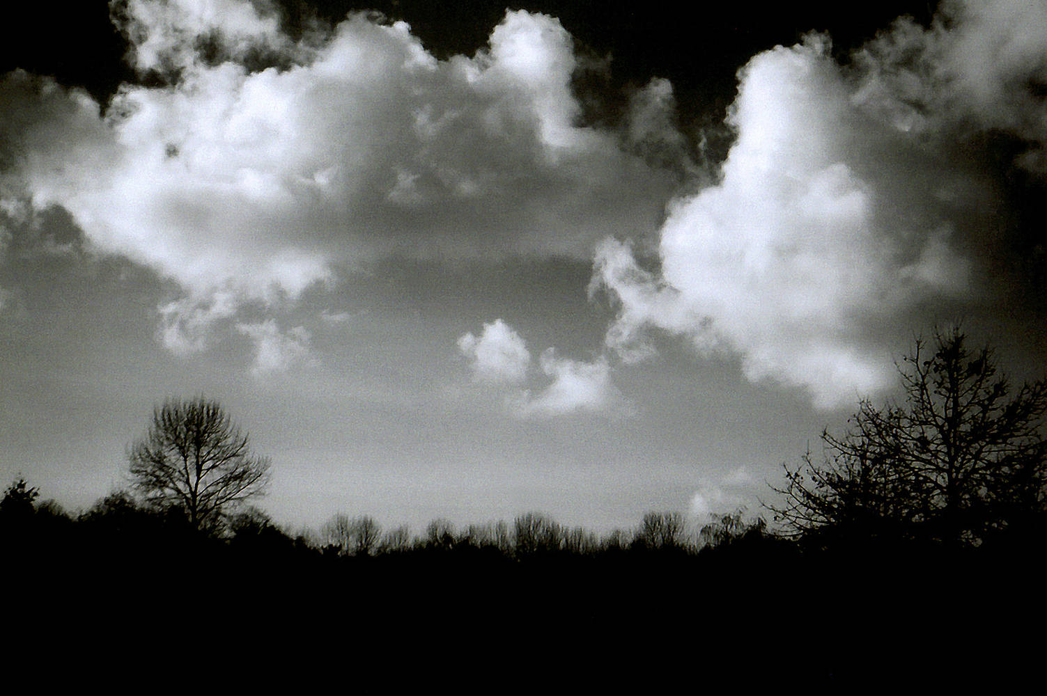 Clouds & trees by Jim Friesen