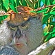 MONKEY SEE by Joeann Edmonds-Matthew