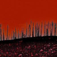 FIRESWEPT TREES YELLOWSTONE NAT'L PARK by Joeann Edmonds-Matthew