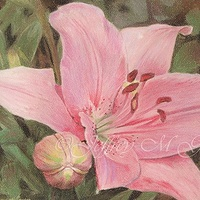 "Oil painting © Jeffrey M Green. ""Consider the Lilies"", 8.5"" x 11"", pastels. by Jeffrey Green"