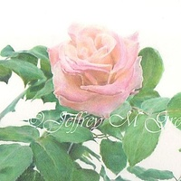 "© Jeffrey M Green. ""Rose on White"", colored pencils, 11"" x 14"". by Jeffrey Green"