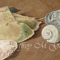 "© Jeffrey M Green. Shell Study, 9 1/2"" x 12"", colored pencils.  by Jeffrey Green"