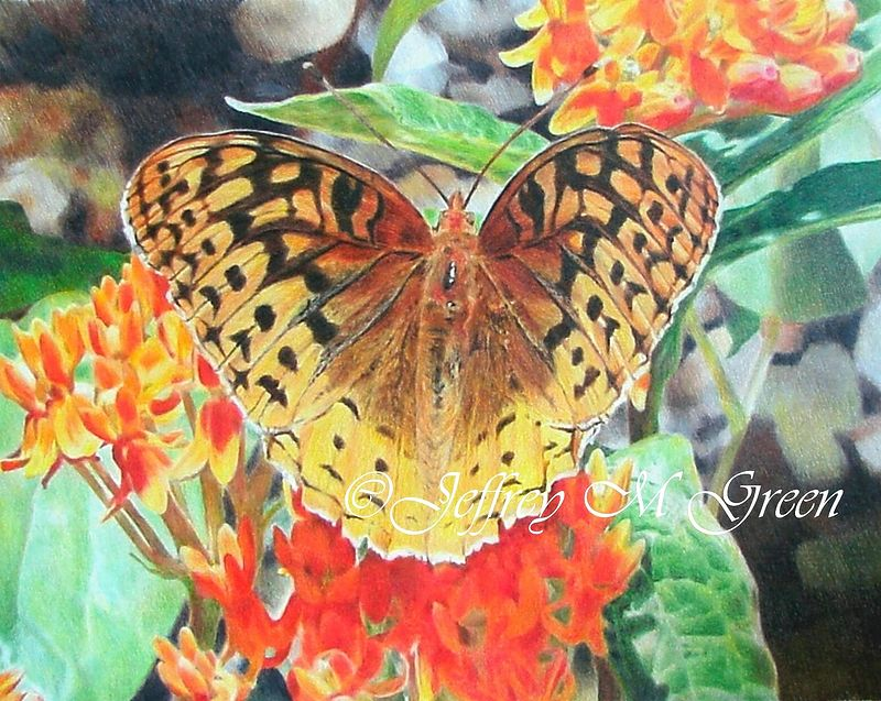 "© Jeffrey M Green. ""Garden Butterfly"", 11"" x 14"", colored pencils. by Jeffrey Green"