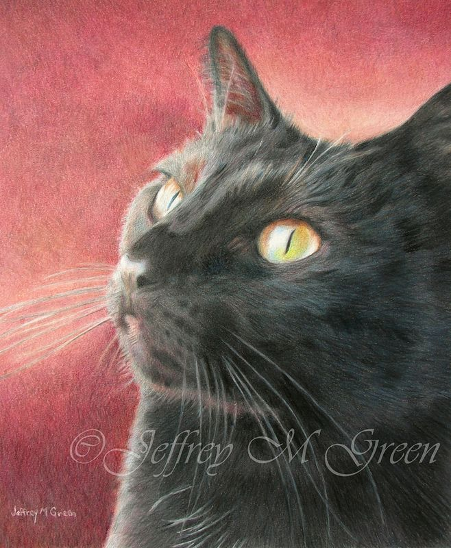 "© Jeffrey M Green. Pet Portrait. ""Raisin"", 8"" x 10"", colored pencils.  by Jeffrey Green"