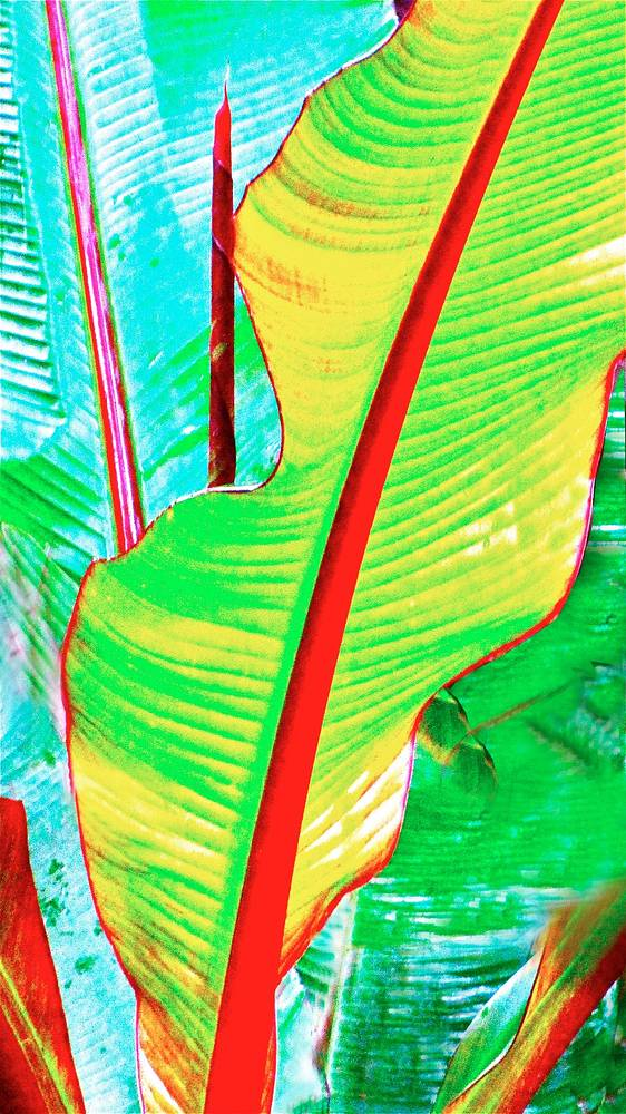 TROPICAL LEAVES by Joeann Edmonds-Matthew